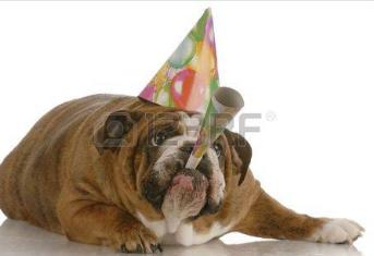 bulldogbirthday